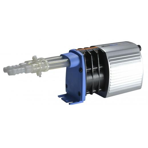 Charles Austen Pumps / MiniBlue R
